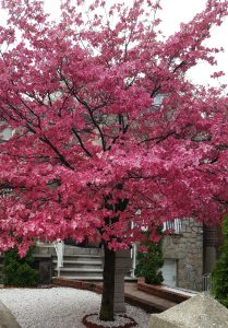 blossom tree by julie nariman